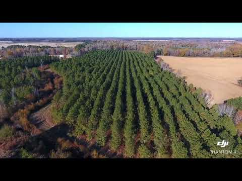 70.53 Acres of Hunting and Timber Land in Edgecombe County NC!