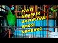 Pancing Cucak Ijo Anda Dengan Ini Pasti Ngamuk Gacor Dan Emosi Nembak Nembak  Mp3 - Mp4 Download