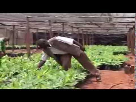 Kenya's technology adoption & research in bid to increase farmer's yields