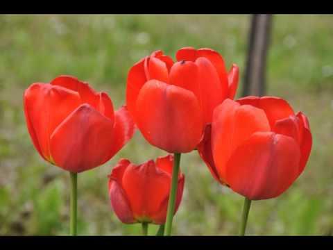 Foto di fiori youtube for Immagini di fiori dipinti