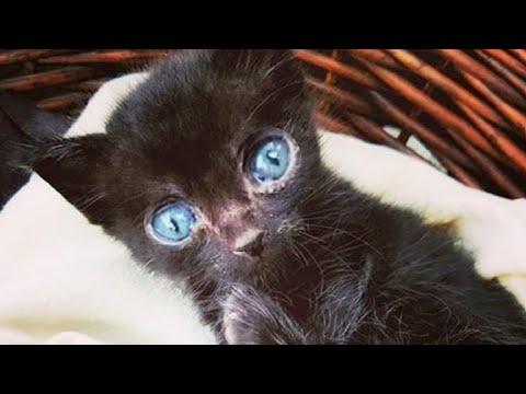Чёрный котёнок если выживешь за 16 января