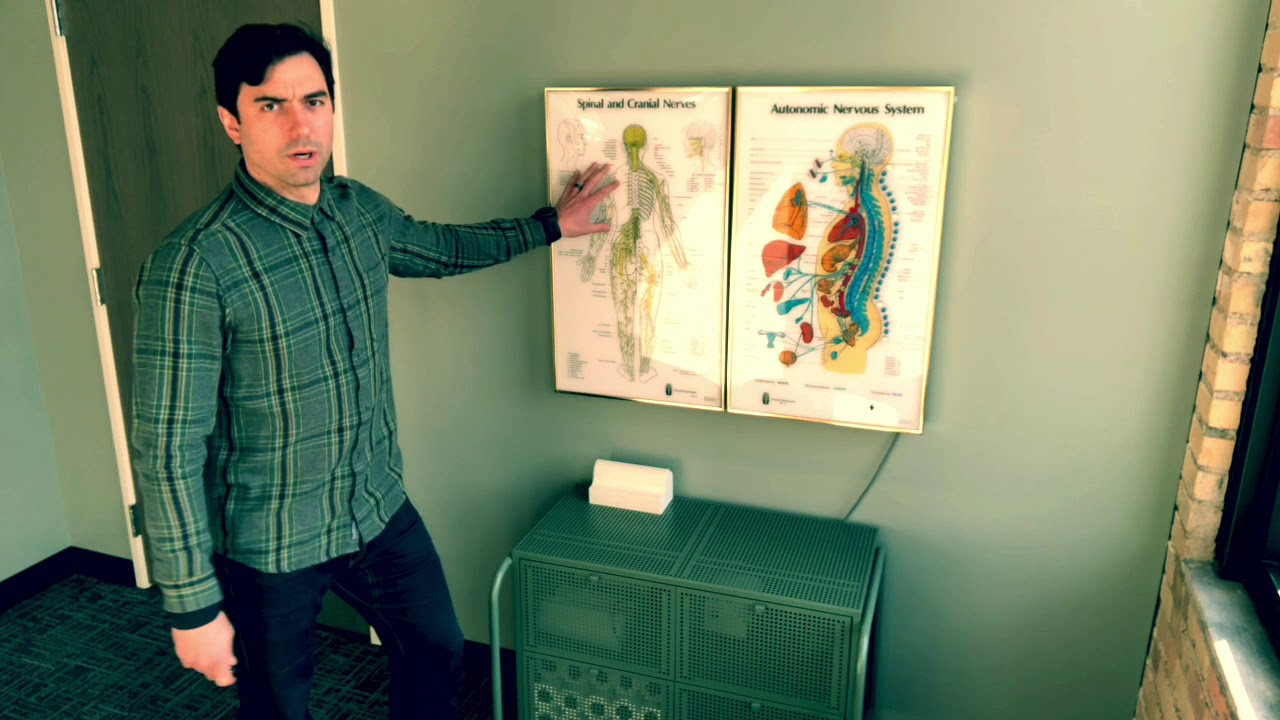 The Chiropractic Adjustment and the Nervous System