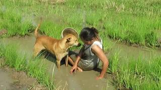 Life style fishing:The smart woman with dog find big fish on the green rice field-How to find(152))