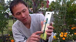 How much and When to Water the Plants in your Vegetable Garden