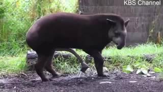 Tier Mating Kompilierungszeit