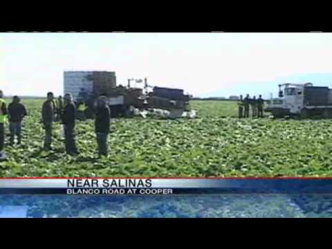 Farm Worker Killed In Salinas Lettuce Field