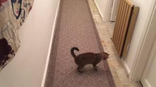 Gambar cover Lazerle Oynayan Kedi | Cat Playing Laser