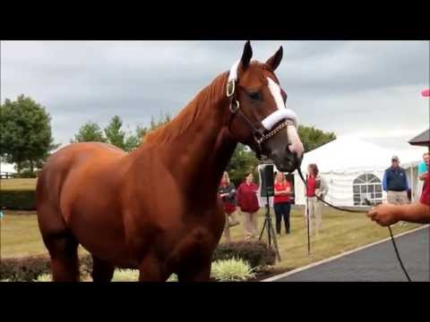 California Chrome, Eskendereya, Graydar- Raw With Mares And Foals At End