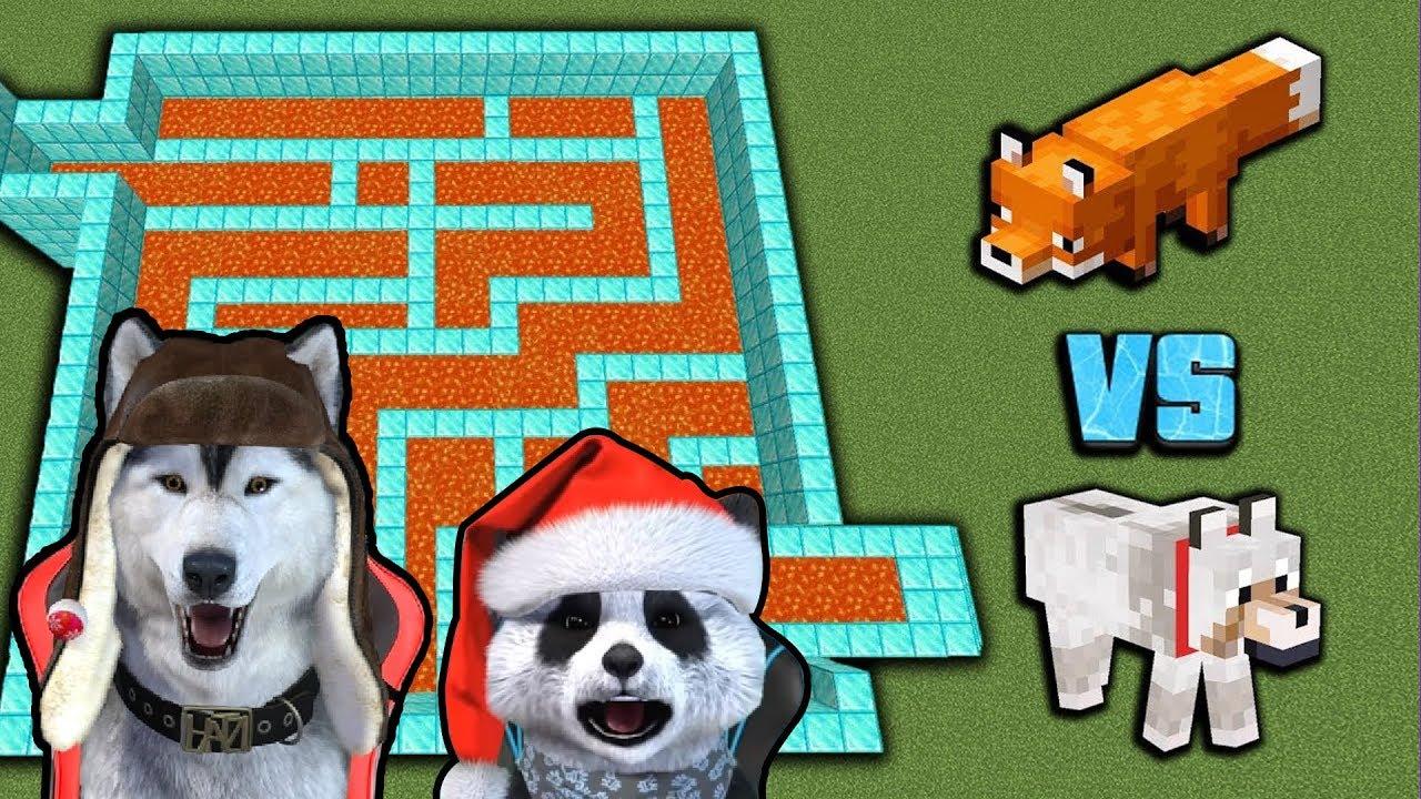 VULPE vs LUP in LABIRINT   CE ANIMAL ESTE MAI DESTEPT? *Reactionez la Video*