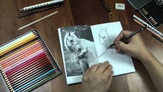 Dibujo caballos con Práctica Dibujo - libro de ejercicios 11