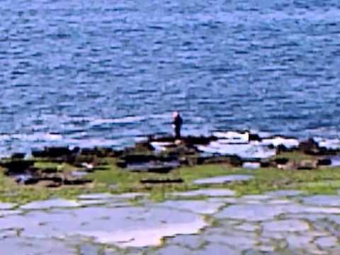 La pêche au Maroc- Plage David à Mohammedia-- pêche à marée basse