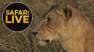 safariLIVE - Sunrise Safari - August 9, 2018