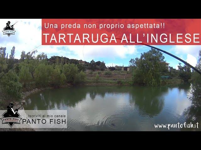 Tartaruga all'inglese - Super test per la Trabucco Venom