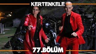 Kertenkele 77. Bölüm