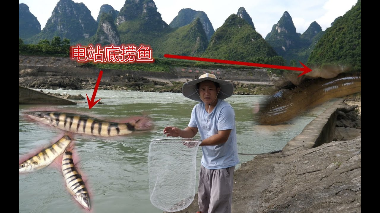 小强带着10米长抄网来电站坝下游捞鱼,发现大量鱼群,捞得好过瘾