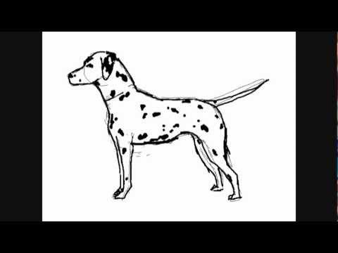 Dessin de chien dalmatien comment dessiner youtube - Coloriage dalmatien ...