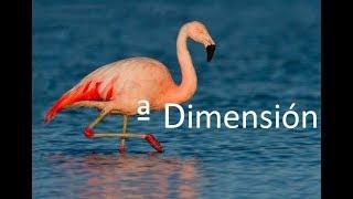 ¿Los flamencos? No puede ser...