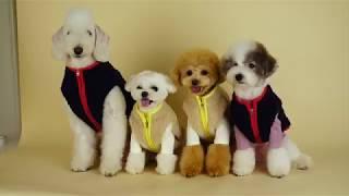 슈앤트리 강아지옷 겨울 신상 촬영 스케치! / dog pet clothes