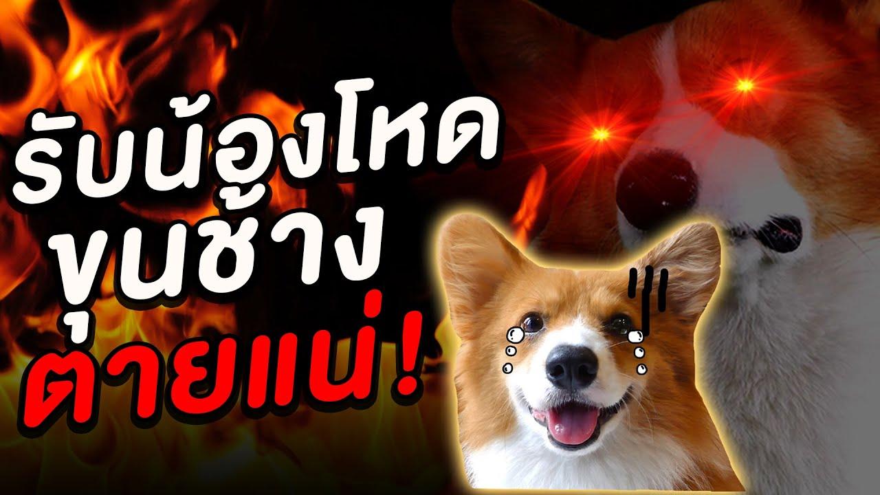 หมาใหม่พี่บี้ตายแน่!! ขุนแผนรับน้องโหด