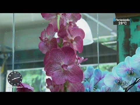 Mercado de flores cresce em todos os estados em 2017 | SBT Brasil (20/02/18)