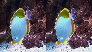 3D videos - Zoo Stuttgart Aquarium 1/3 - 3D SBS VR Box