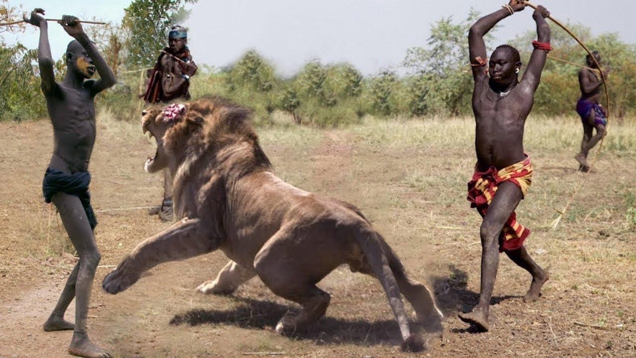 Amazing Wild Animals vs Human - Hunting lion , gorilla ...