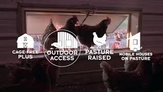 Egg Standards Beyond Cage-Free l Whole Foods Market