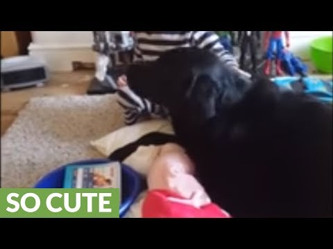 Little boy preciously sings his dog a lullaby