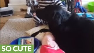 Little boy preciously sings his dog a lullaby