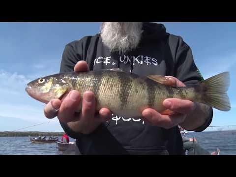 Discovering - Perch, Smallmouth Fishing On Big Bay De Noc, Tick Repellent.