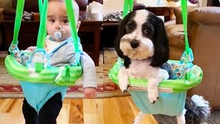Cute Is Not Enough 2  Dog Lovers Babies Compilation