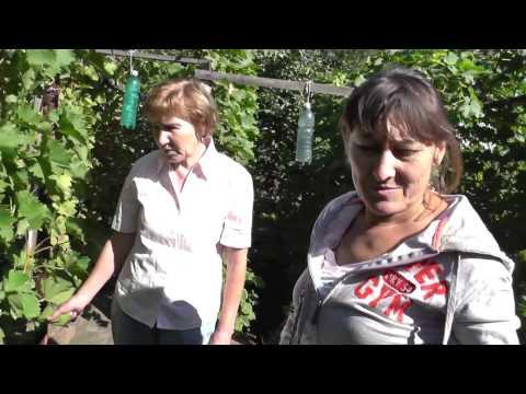 Поездка к виноградарям Пегановым / покупаем новые сорта винограда