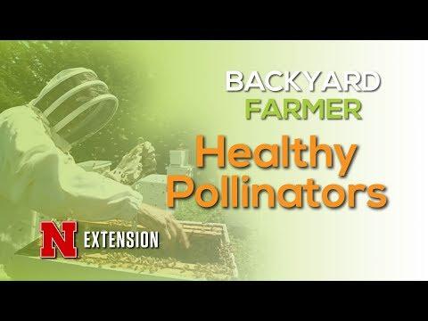 Healthy Pollinators
