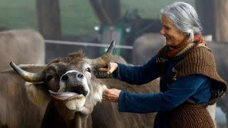 برگزاری همهپرسی در سوئیس در مورد بریدن شاخ بز و گاو
