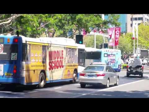Sydney City Transport Vlog 100 Part 6: Sydney Buses