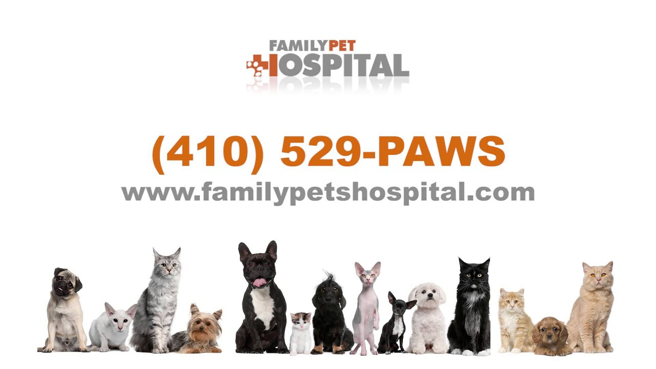 Family Pet Hospital Perry Hall MD - YouTube