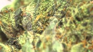 Happy 420   Official 2012 Weed Anthem   Higher hd720