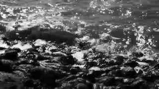 Roggenbach -   Mit dir morgen (Offizielles Musikvideo)