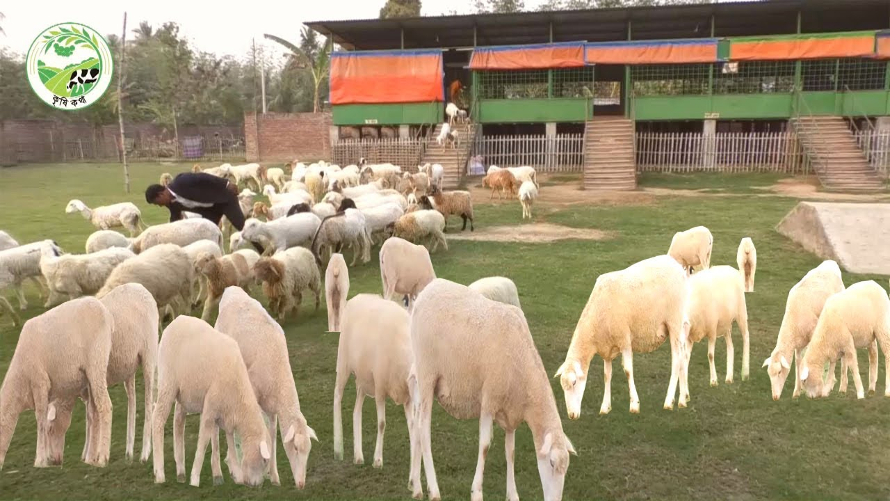 Sheep Farming Business Plan How To Start A Business Sheep Farm With Low Investment And High Profit Youtube