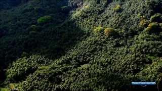 Запах странствий: Французская Полинезия - Таити, Туамоту, Маркизские острова
