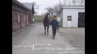 広尾サラブレッド倶楽部、2016年2歳募集馬 クレッシェンドラヴ(ハ...