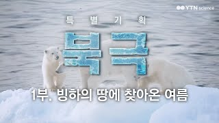 [특별기획 북극] 1부.빙하의 땅에 찾아온 여름 / YTN 사이언스