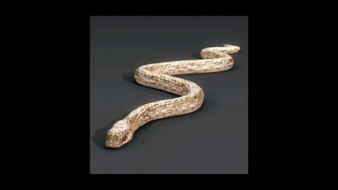 Snake 3D model | Animals Reptile 3D model | max, 3ds, obj, c4d, lwo