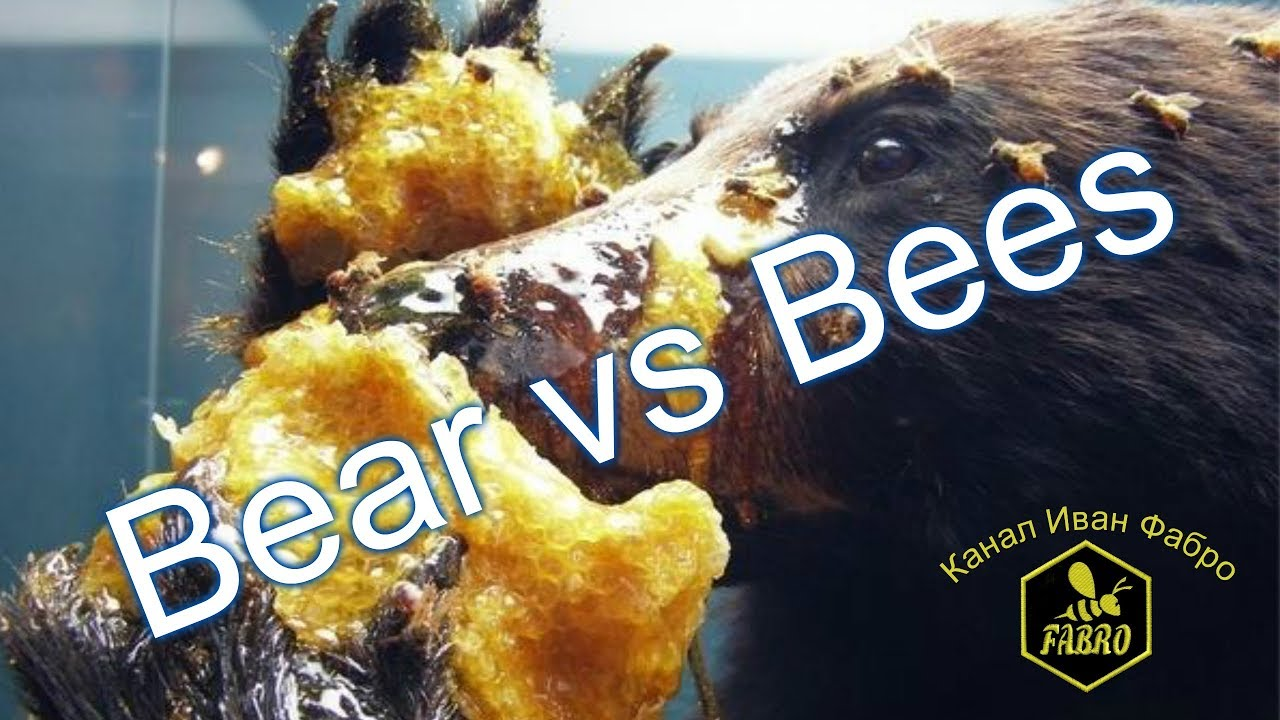 Как медведь ворует мед & Bear vs Bees