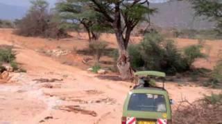 National Reserves - Shaba & Samburu, Kenya.m4v