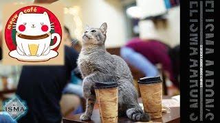 Meow Café - ElIsmaAaron's