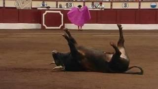 Voltereta Toro