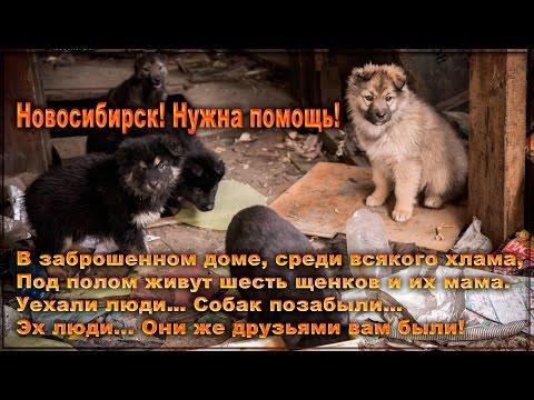 МТС банк в Новосибирске: адрес, телефоны, банкоматы, режим