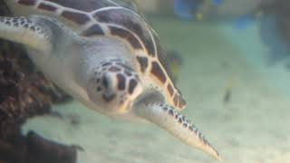 [국립생태원] 바다거북에게 찾아온 가을