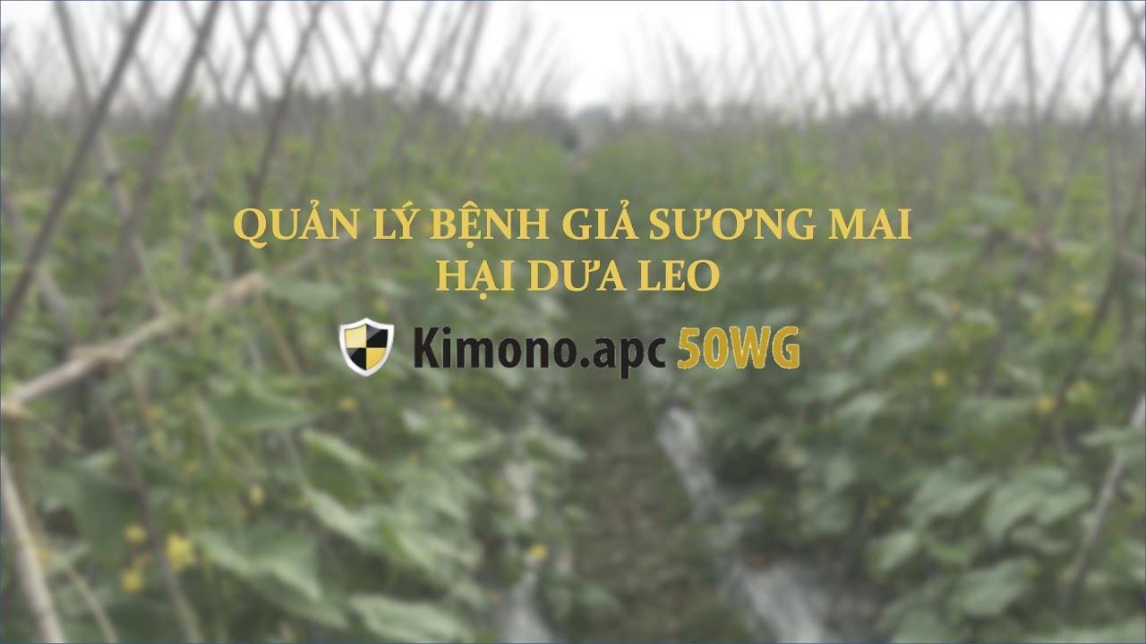 Trừ giả sương mại hại dưa leo với Kimono.apc 50WG - Nông dược Việt Nam VN-APC